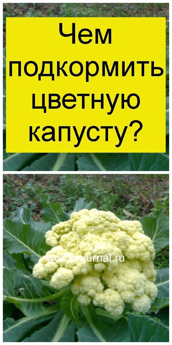 Чем подкормить цветную капусту 4