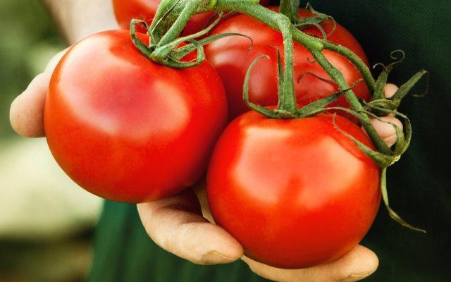 Дедовский супер рецепт для томатов 1