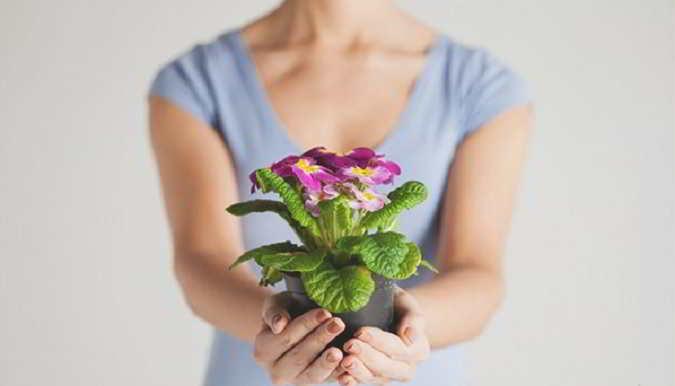 Можно ли дарить цветы в горшках 1