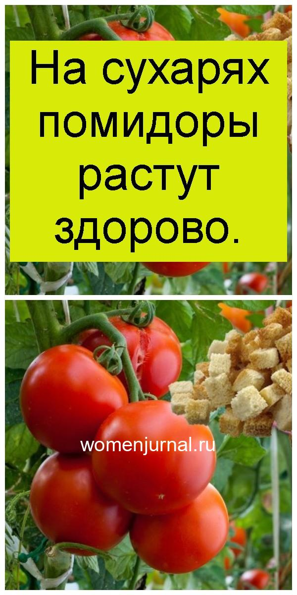 На сухарях помидоры растут здорово 4