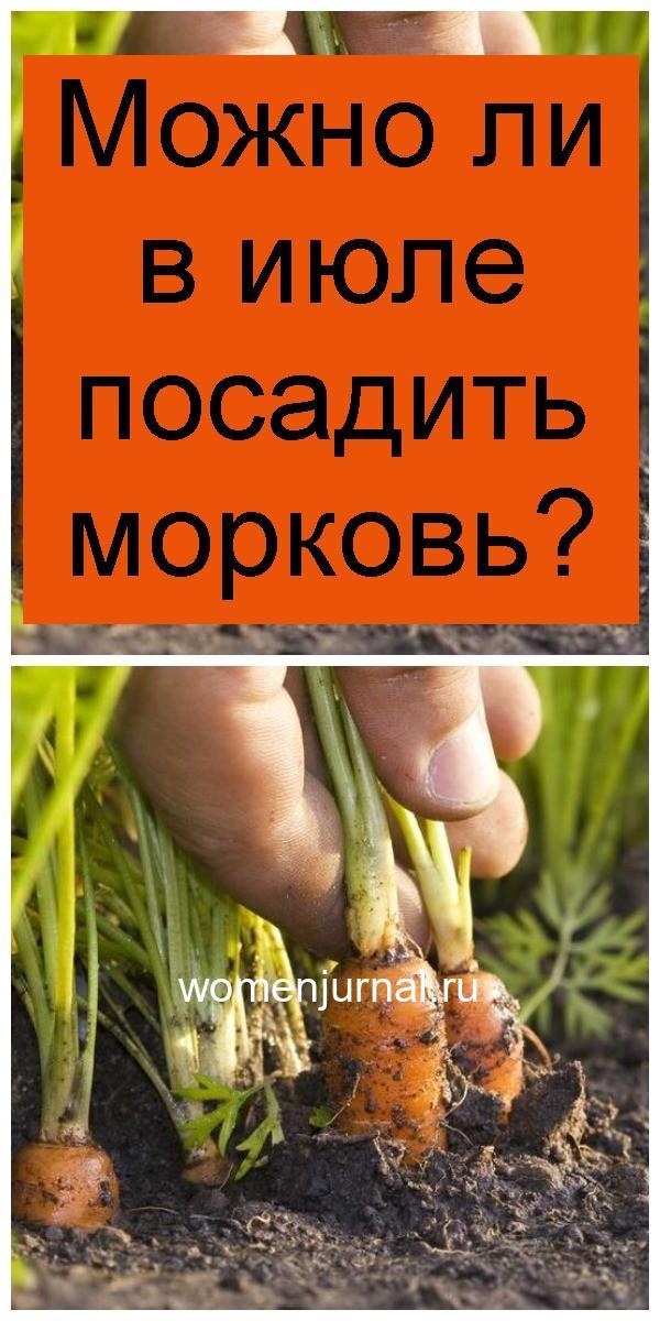 Можно ли в июле посадить морковь 4