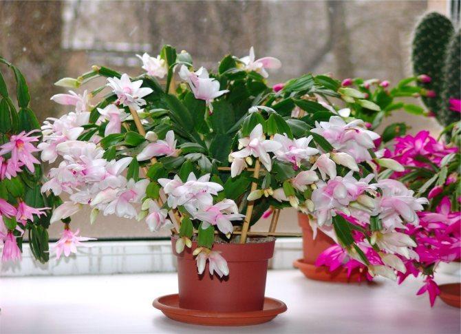 foto-s-sajta-http-o-flora-com-5890718