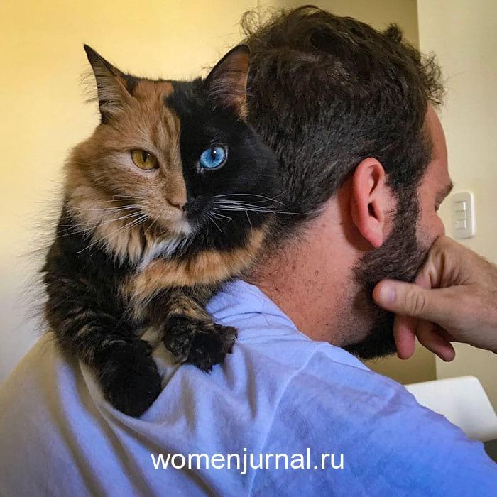 wsi-imageoptim-koshka-s-samym-redkim-okrasom-v-mire-kak-slozhilas-eyo-zhizn_002-2639426