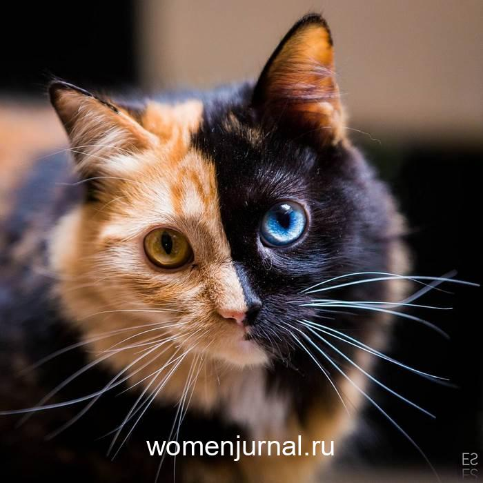 wsi-imageoptim-koshka-s-samym-redkim-okrasom-v-mire-kak-slozhilas-eyo-zhizn_010-6464598